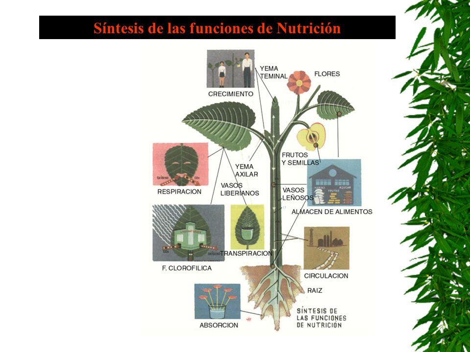 Síntesis de las funciones de Nutrición