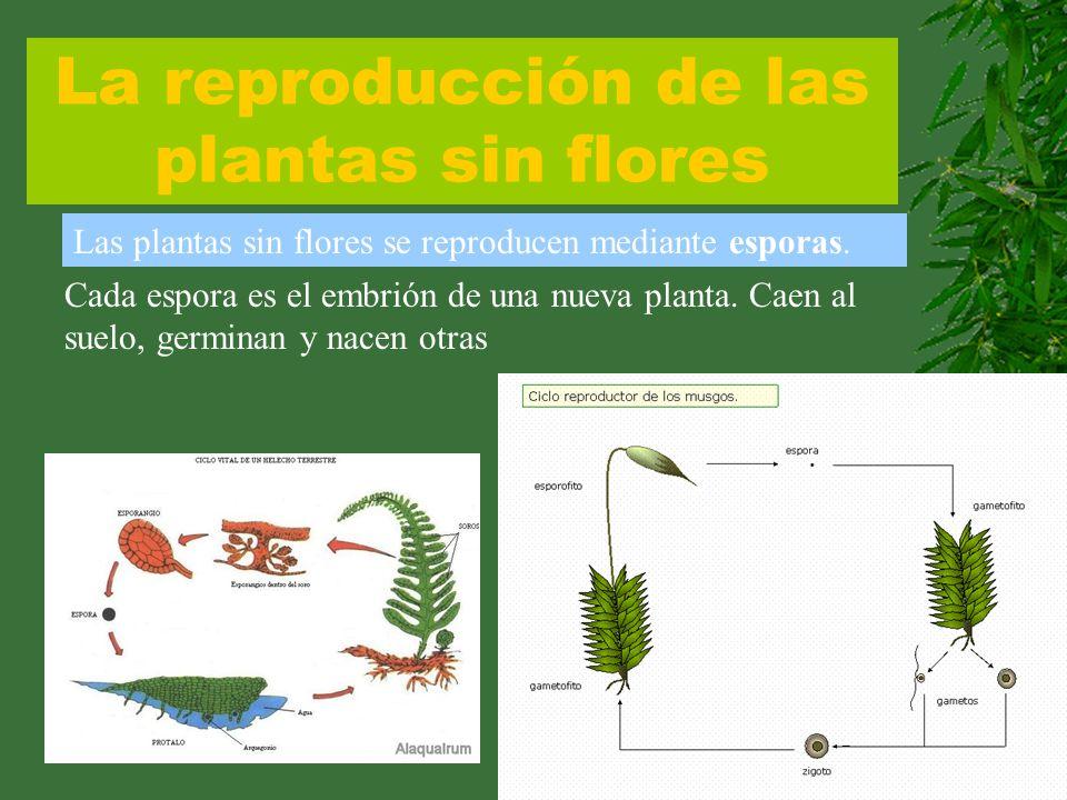 La reproducción de las plantas sin flores