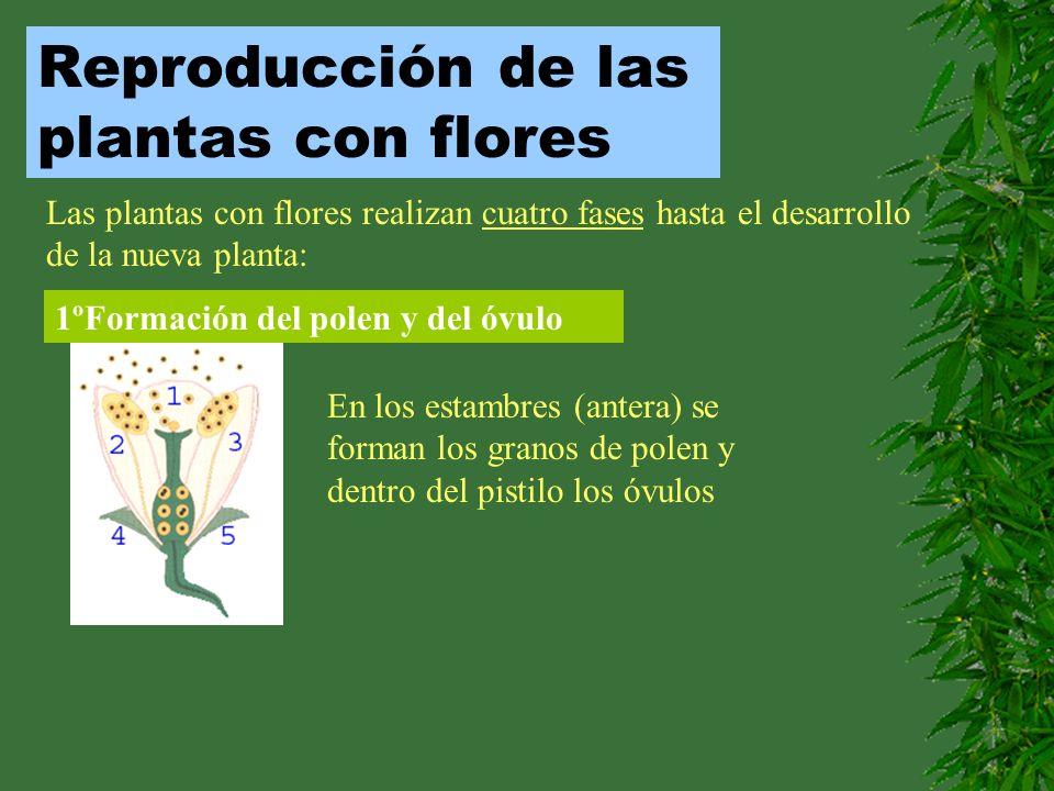 Reproducción de las plantas con flores