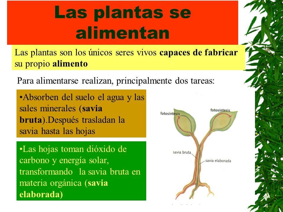 Las plantas se alimentan