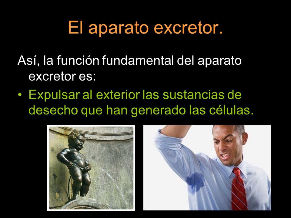 El aparato excretor.Así, la función fundamental del aparato excretor es: