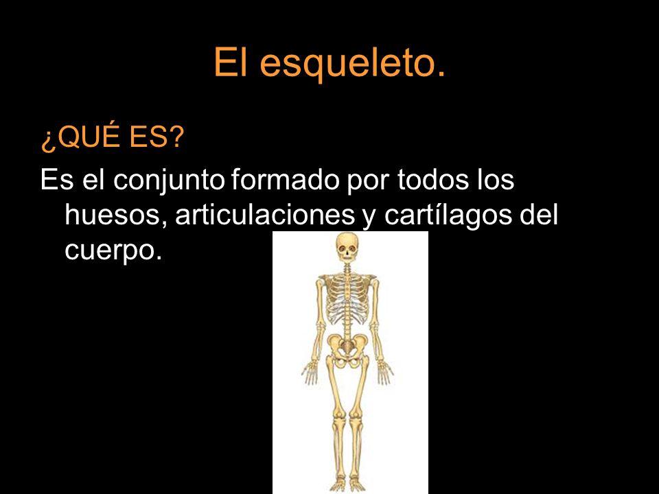 El esqueleto. ¿QUÉ ES.