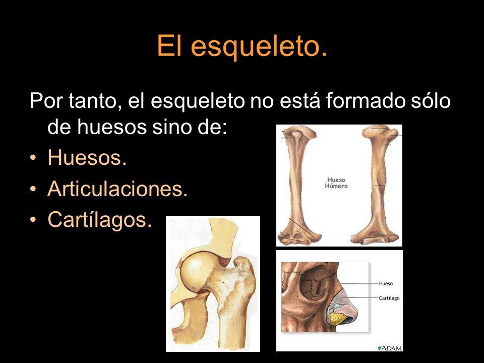 El esqueleto. Por tanto, el esqueleto no está formado sólo de huesos sino de: Huesos. Articulaciones.