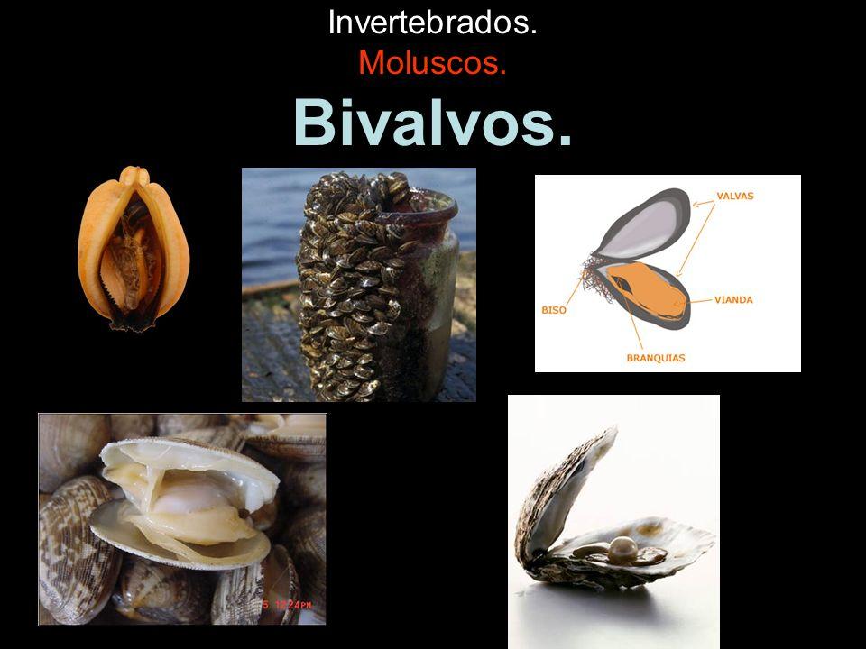 Invertebrados. Moluscos. Bivalvos.