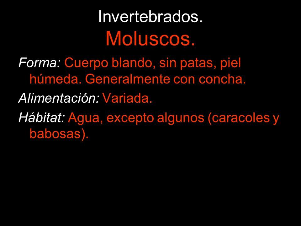 Invertebrados. Moluscos.