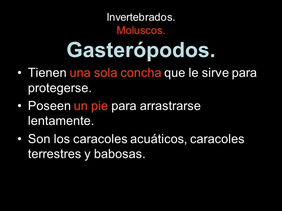 Invertebrados. Moluscos. Gasterópodos.