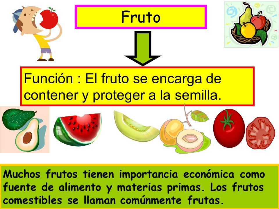 Fruto Función : El fruto se encarga de contener y proteger a la semilla.