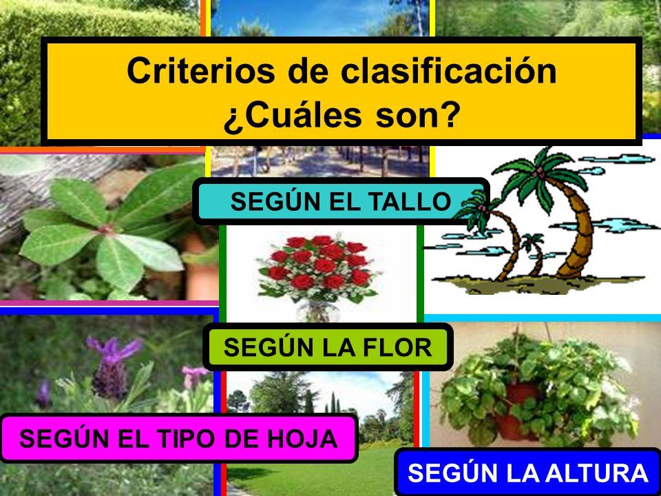Criterios de clasificación ¿Cuáles son