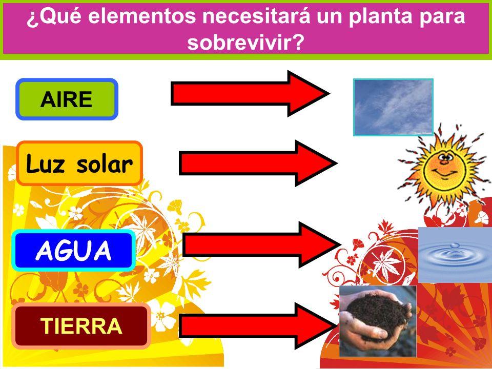¿Qué elementos necesitará un planta para sobrevivir