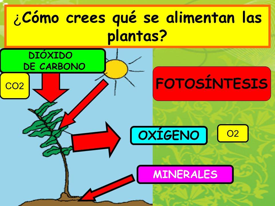 ¿Cómo crees qué se alimentan las plantas
