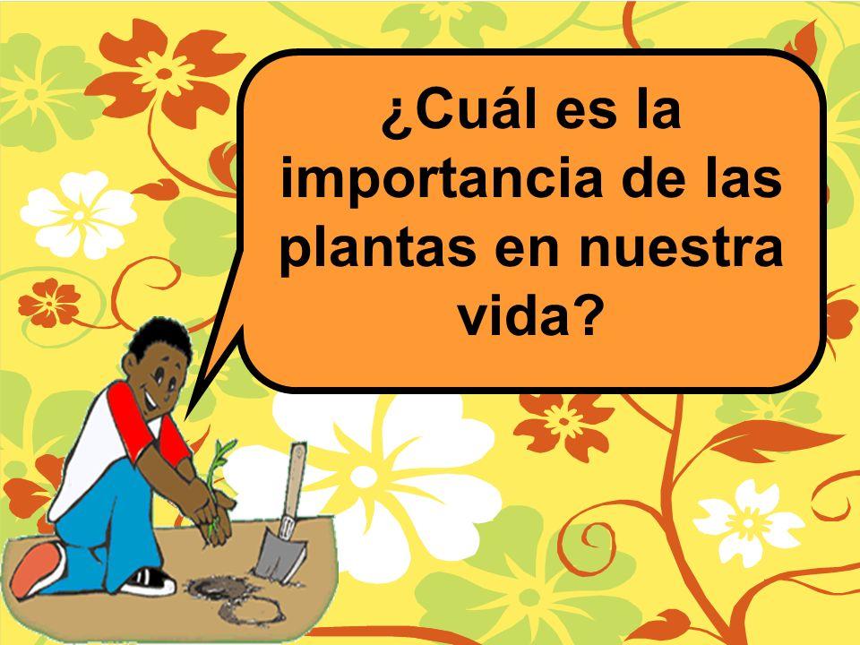 ¿Cuál es la importancia de las plantas en nuestra vida