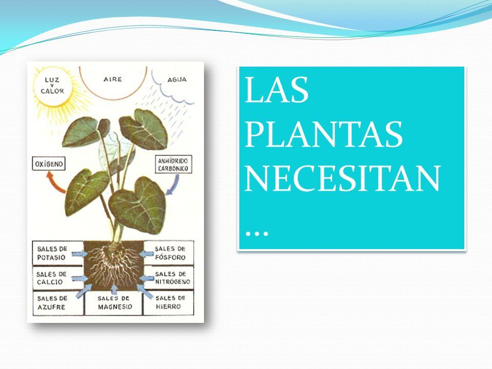 LAS PLANTAS NECESITAN…