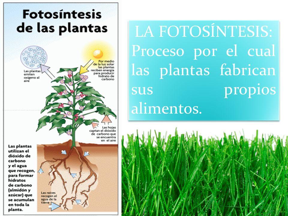LA FOTOSÍNTESIS: Proceso por el cual las plantas fabrican sus propios alimentos.