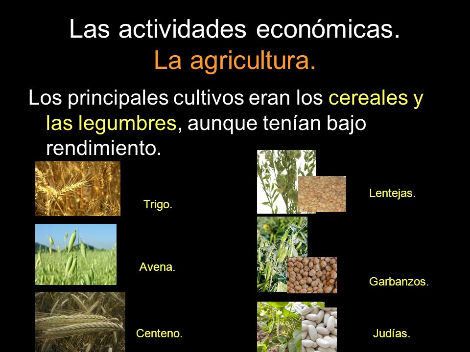 Las actividades económicas. La agricultura.
