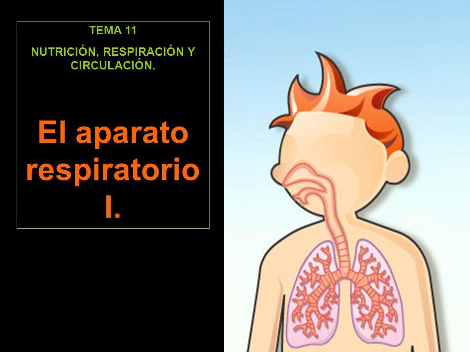 NUTRICIÓN, RESPIRACIÓN Y CIRCULACIÓN. El aparato respiratorio I.