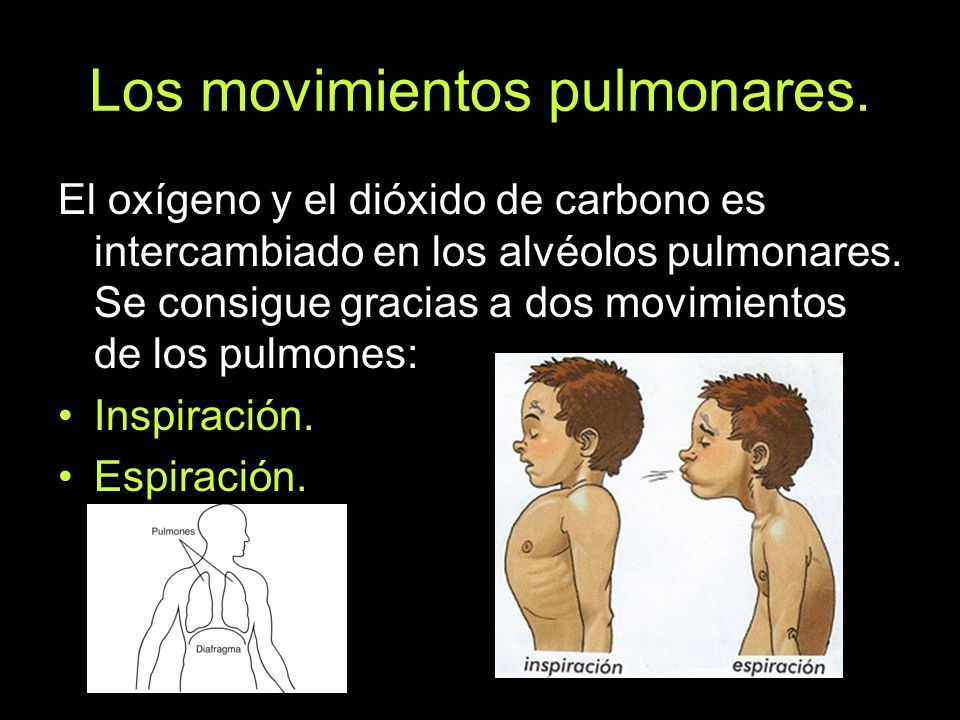 Los movimientos pulmonares.