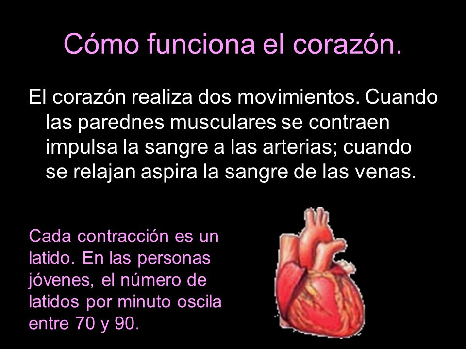 Cómo funciona el corazón.
