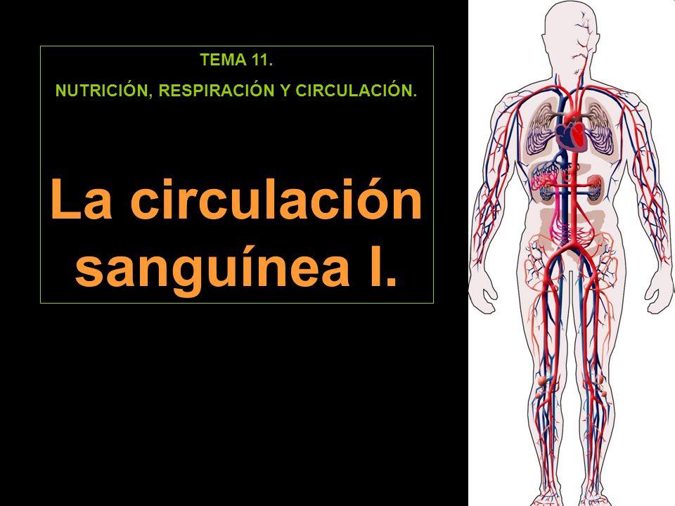 NUTRICIÓN, RESPIRACIÓN Y CIRCULACIÓN. La circulación sanguínea I.