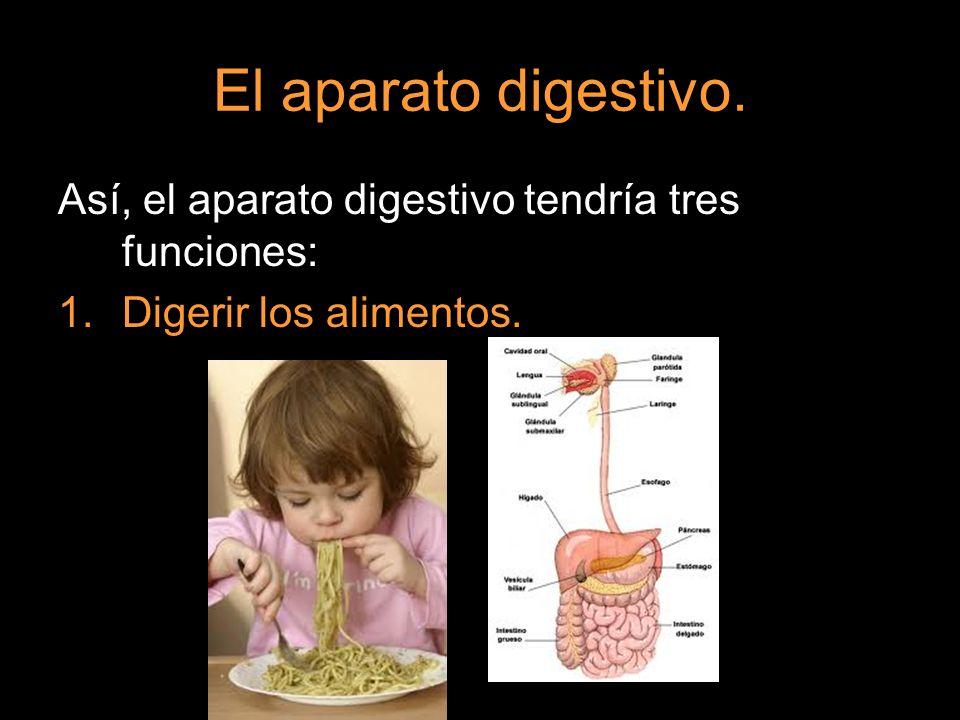 El aparato digestivo. Así, el aparato digestivo tendría tres funciones: Digerir los alimentos.