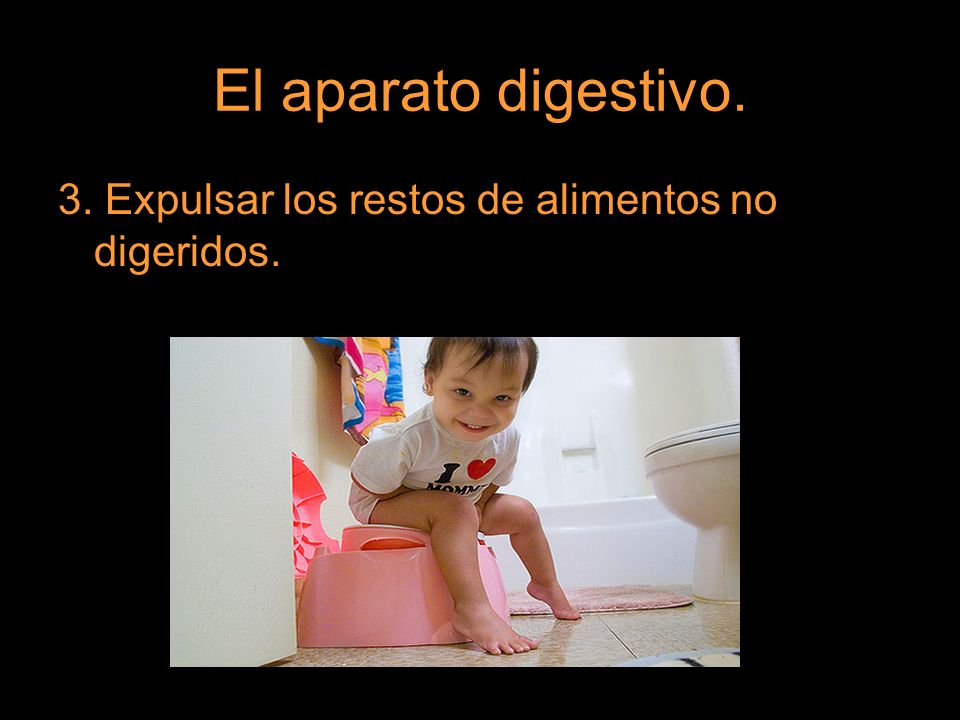 El aparato digestivo. 3. Expulsar los restos de alimentos no digeridos.