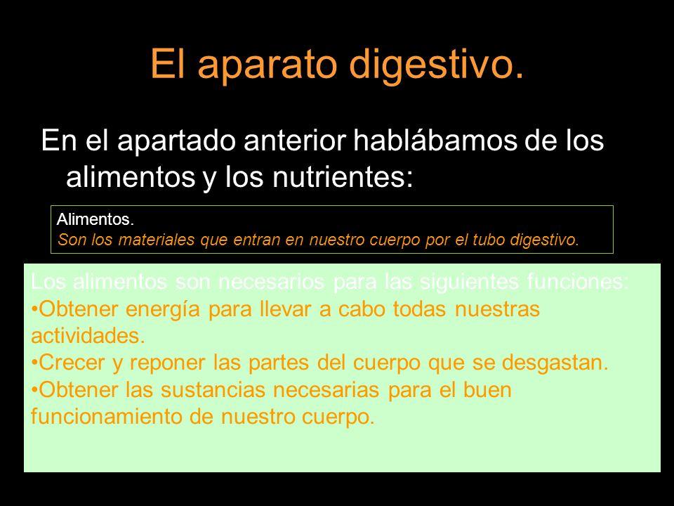 El aparato digestivo. En el apartado anterior hablábamos de los alimentos y los nutrientes: Alimentos.