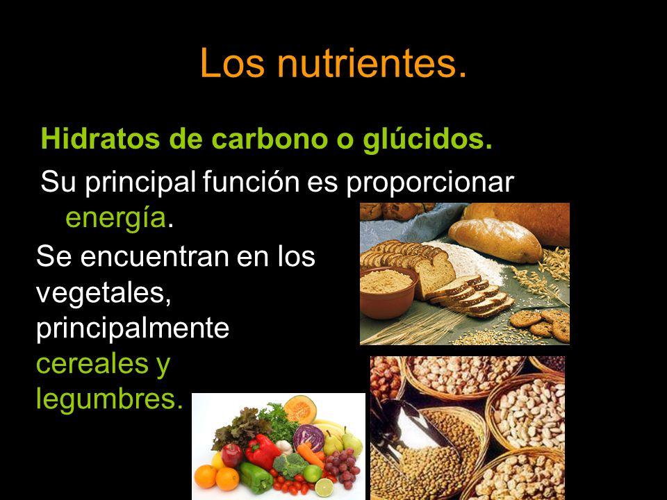 Los nutrientes. Hidratos de carbono o glúcidos.