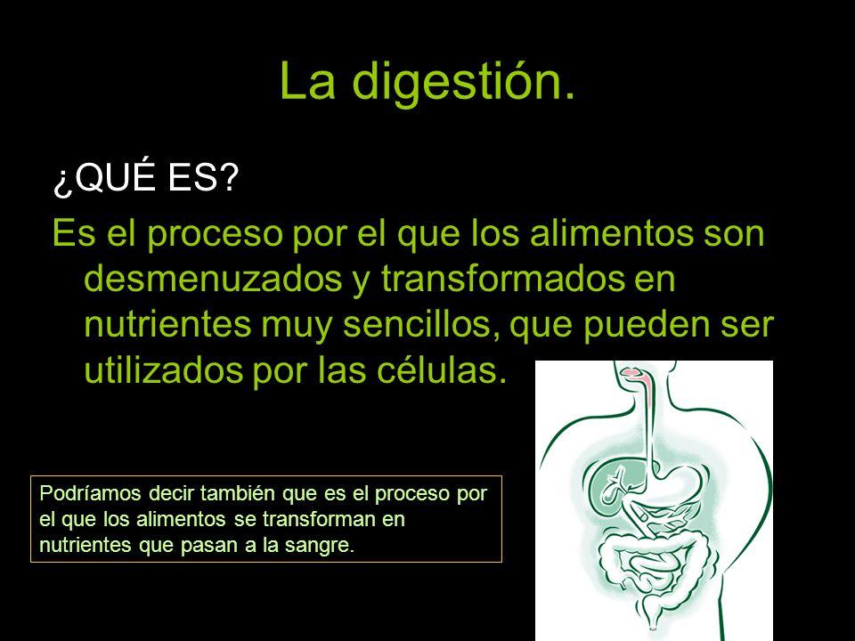 La digestión. ¿QUÉ ES