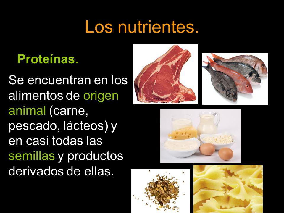 Los nutrientes. Proteínas.