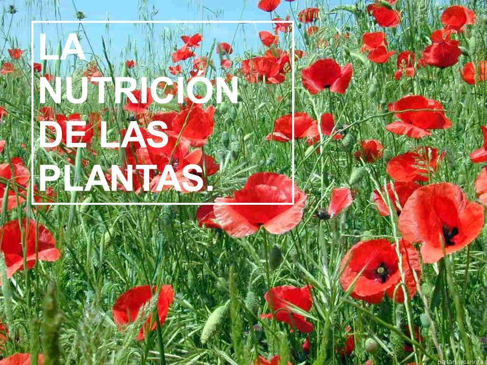 LA NUTRICIÓN DE LAS PLANTAS.