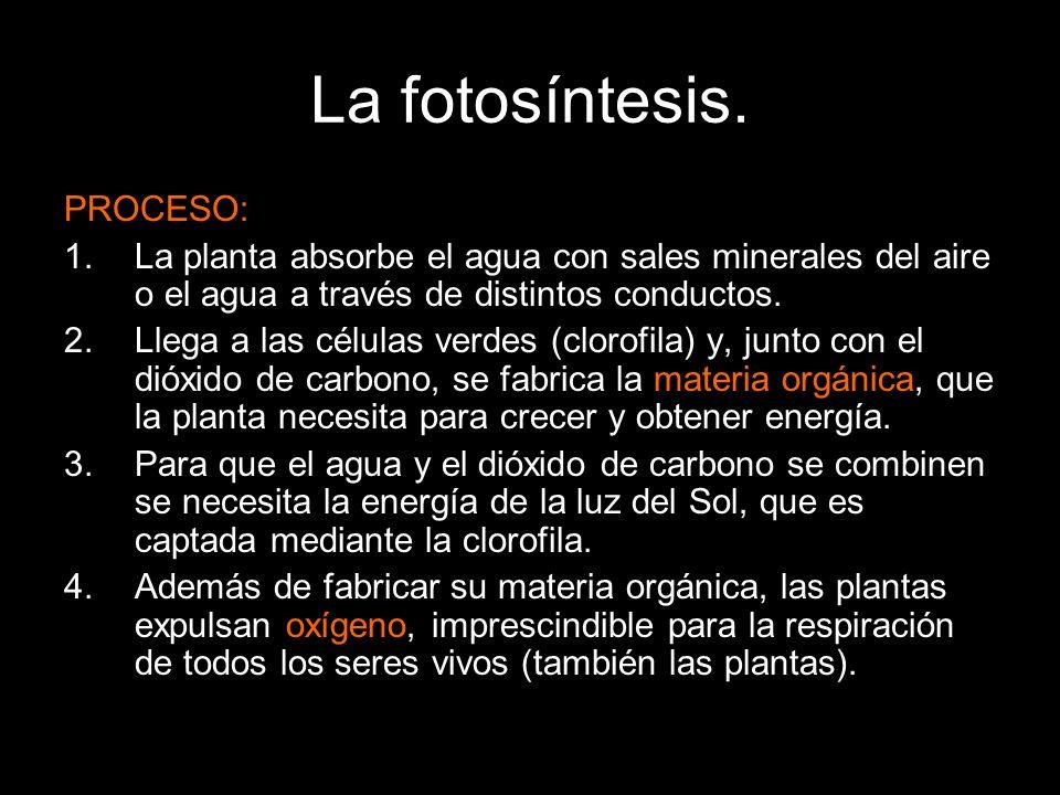 La fotosíntesis. PROCESO: