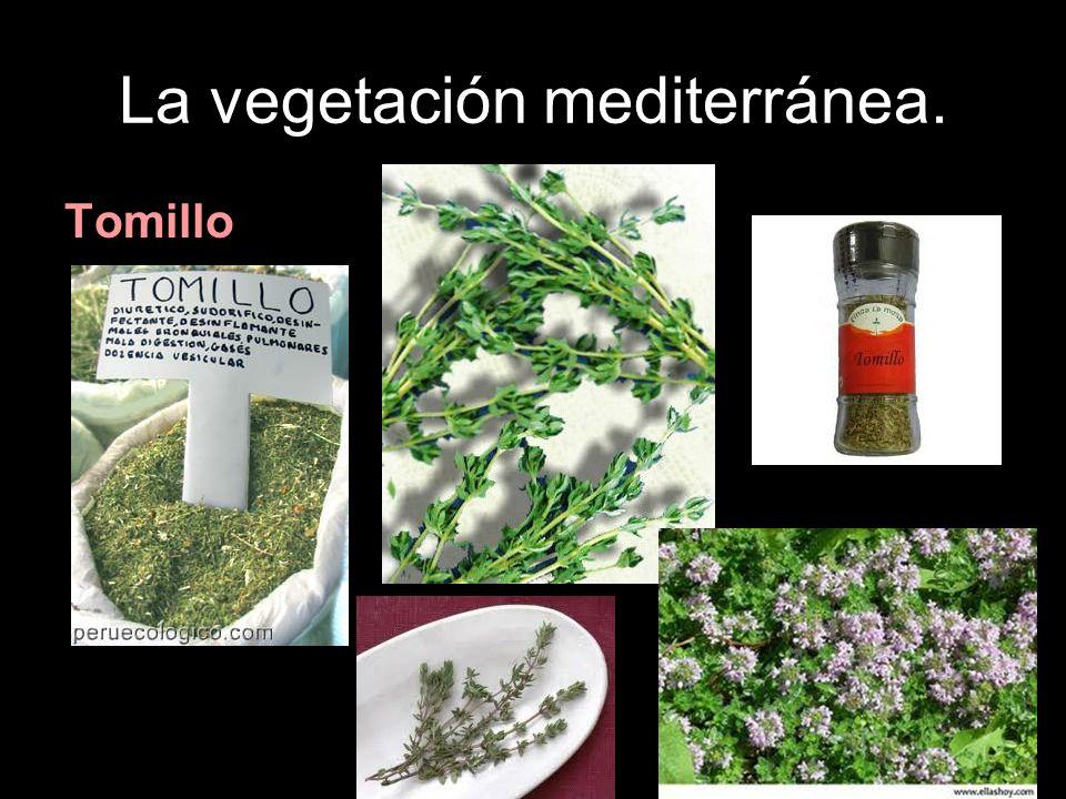La vegetación mediterránea.