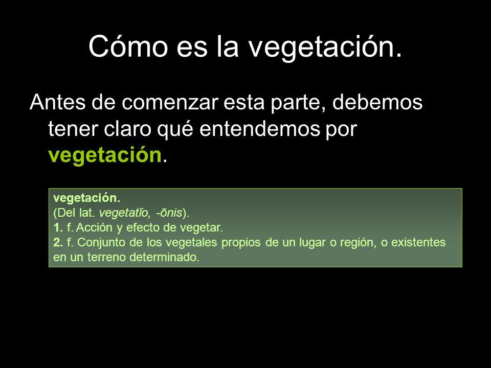 Cómo es la vegetación. Antes de comenzar esta parte, debemos tener claro qué entendemos por vegetación.