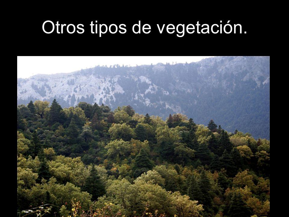 Otros tipos de vegetación.