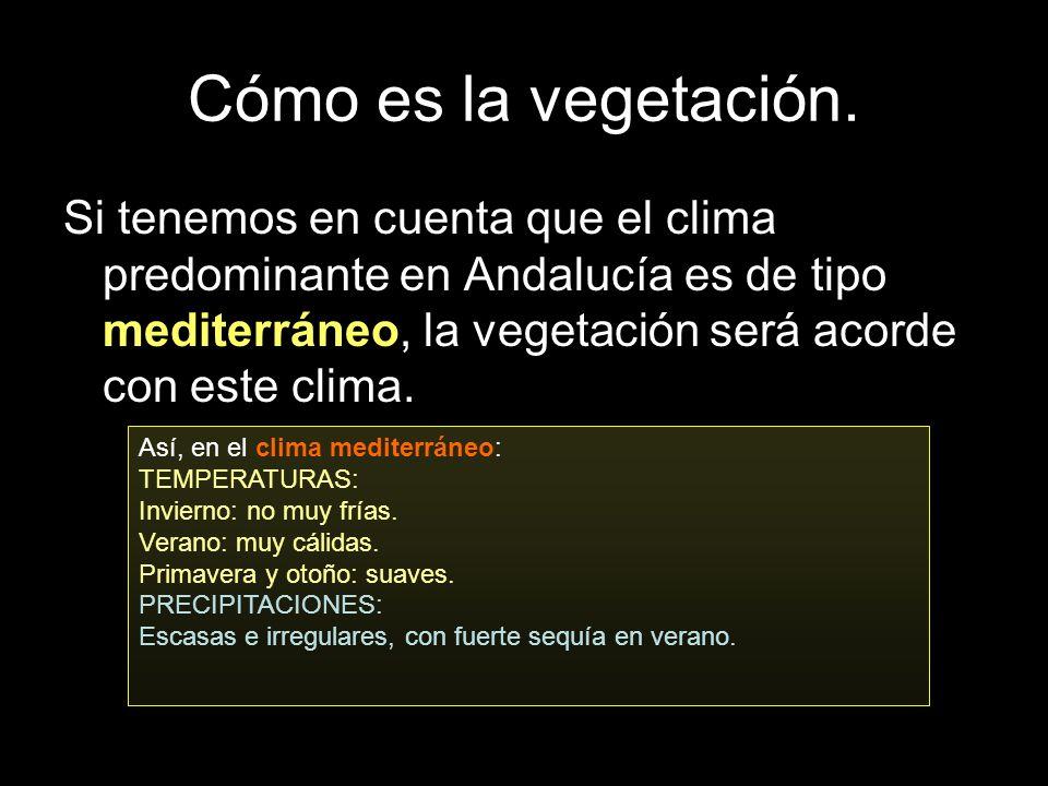 Cómo es la vegetación.Si tenemos en cuenta que el clima predominante en Andalucía es de tipo mediterráneo, la vegetación será acorde con este clima.
