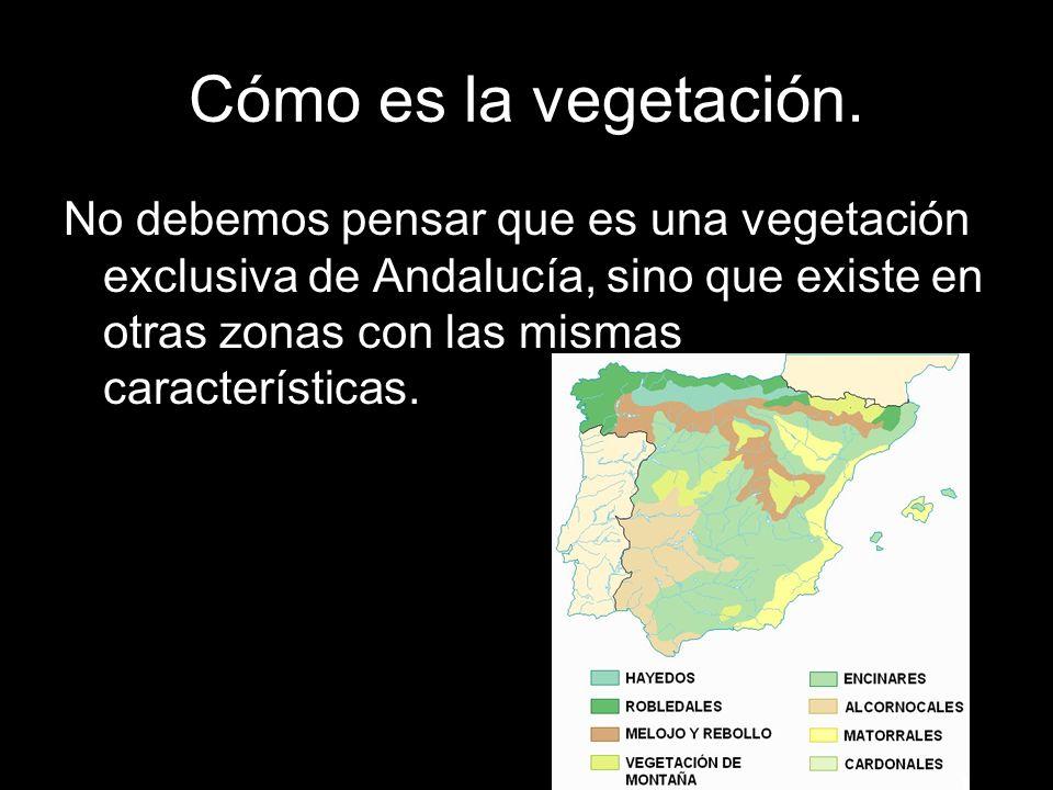 Cómo es la vegetación.No debemos pensar que es una vegetación exclusiva de Andalucía, sino que existe en otras zonas con las mismas características.
