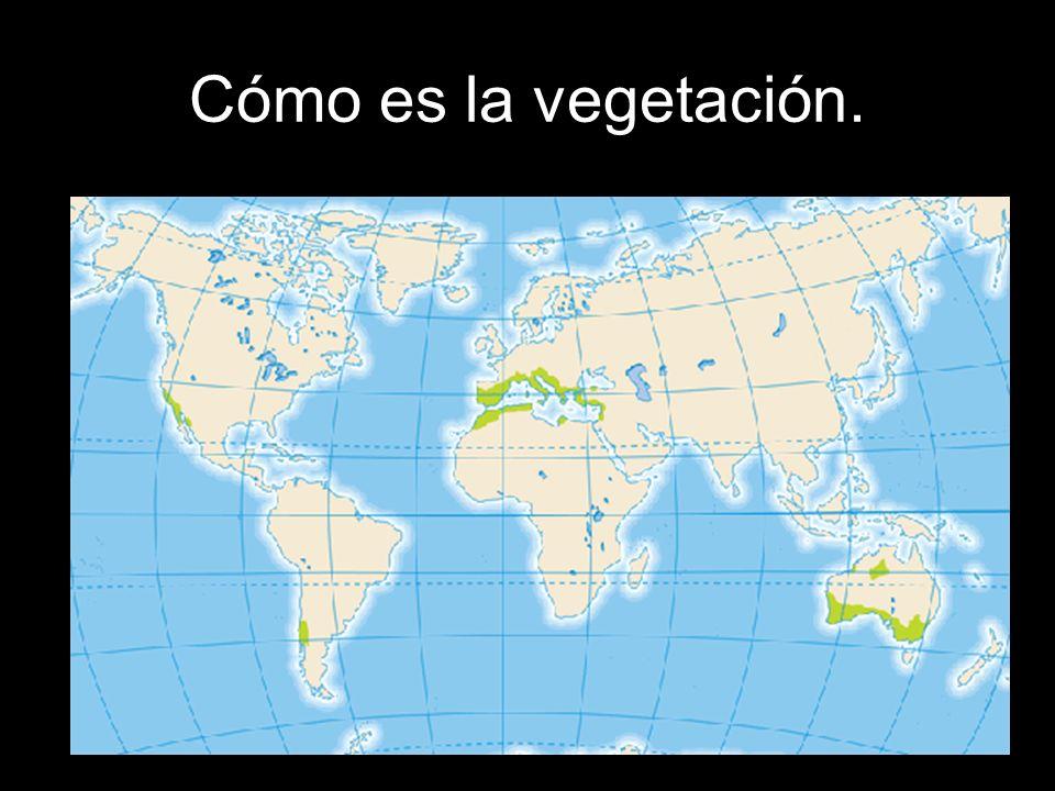Cómo es la vegetación.