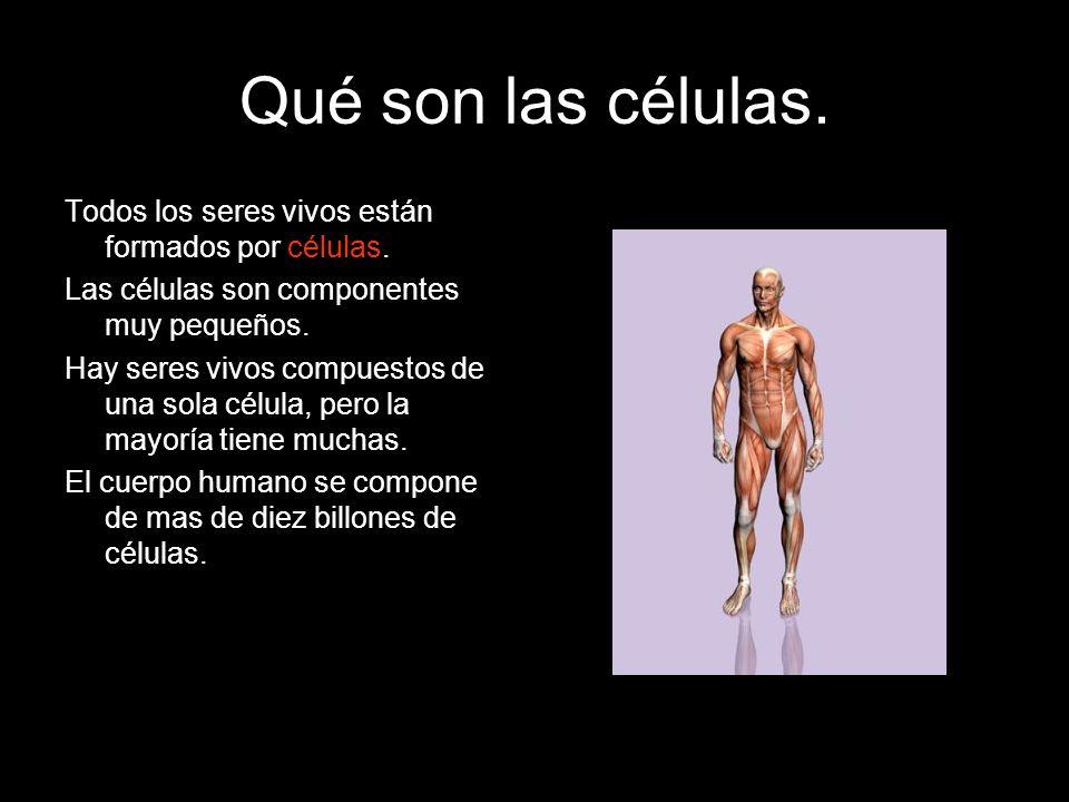 Qué son las células. Todos los seres vivos están formados por células.