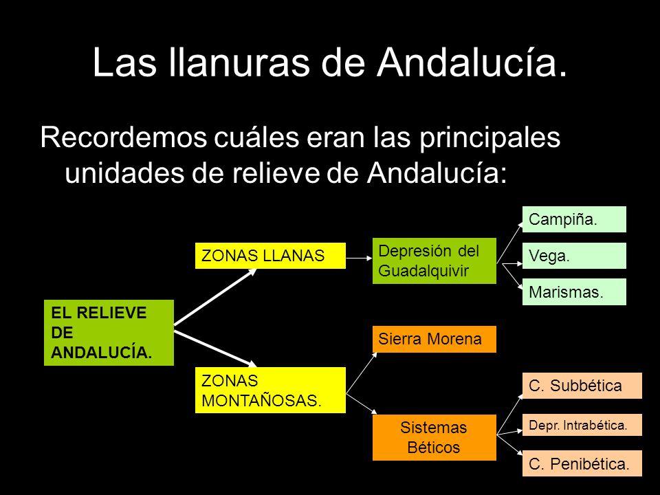 Las llanuras de Andalucía.