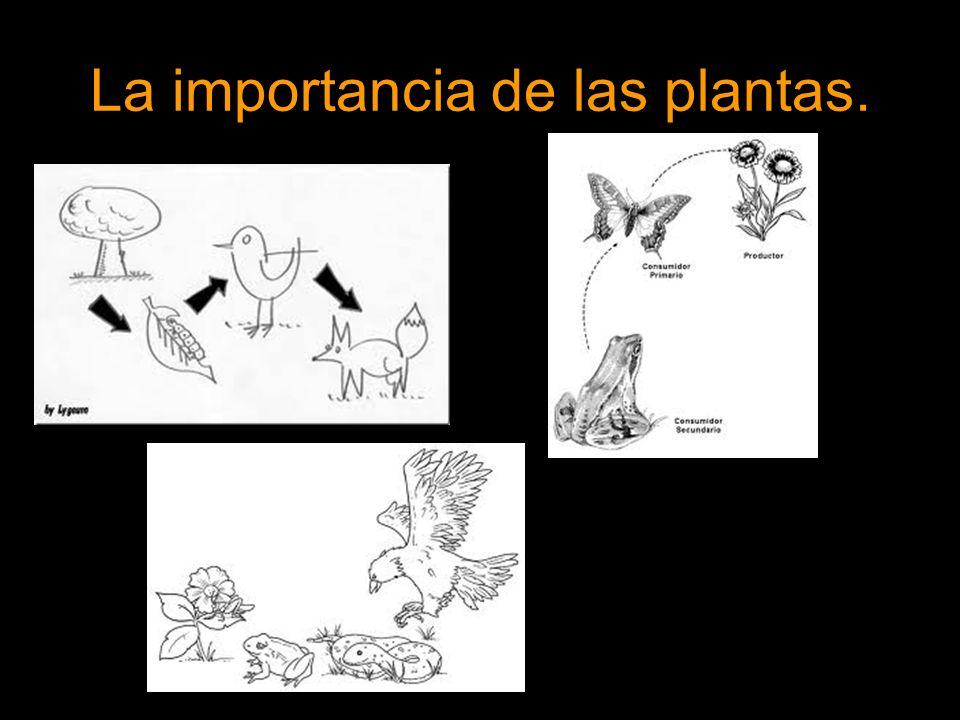 La importancia de las plantas.