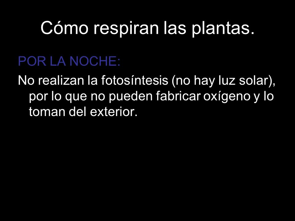 Cómo respiran las plantas.