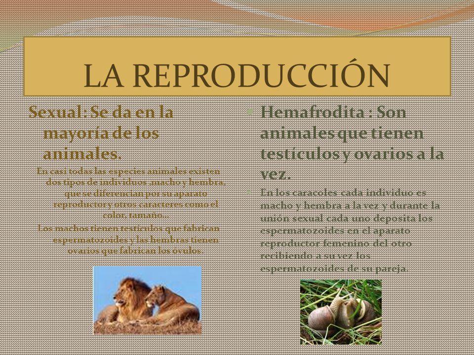LA REPRODUCCIÓN Sexual: Se da en la mayoría de los animales.