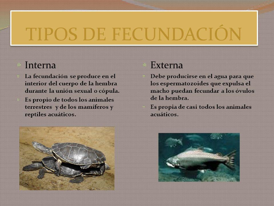 TIPOS DE FECUNDACIÓN Interna Externa