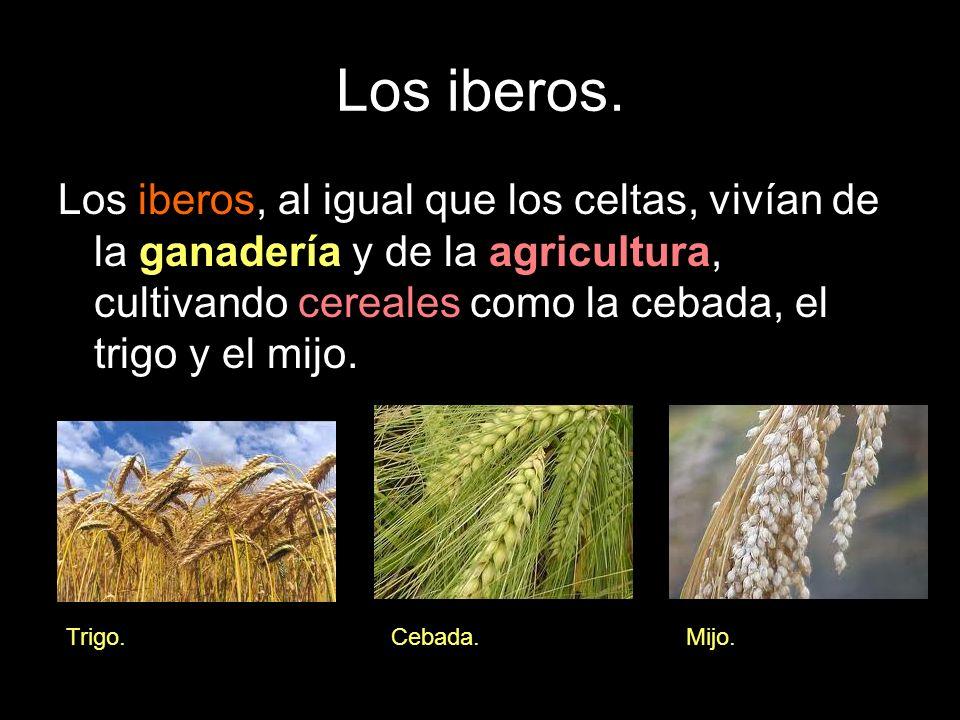 Los iberos. Los iberos, al igual que los celtas, vivían de la ganadería y de la agricultura, cultivando cereales como la cebada, el trigo y el mijo.