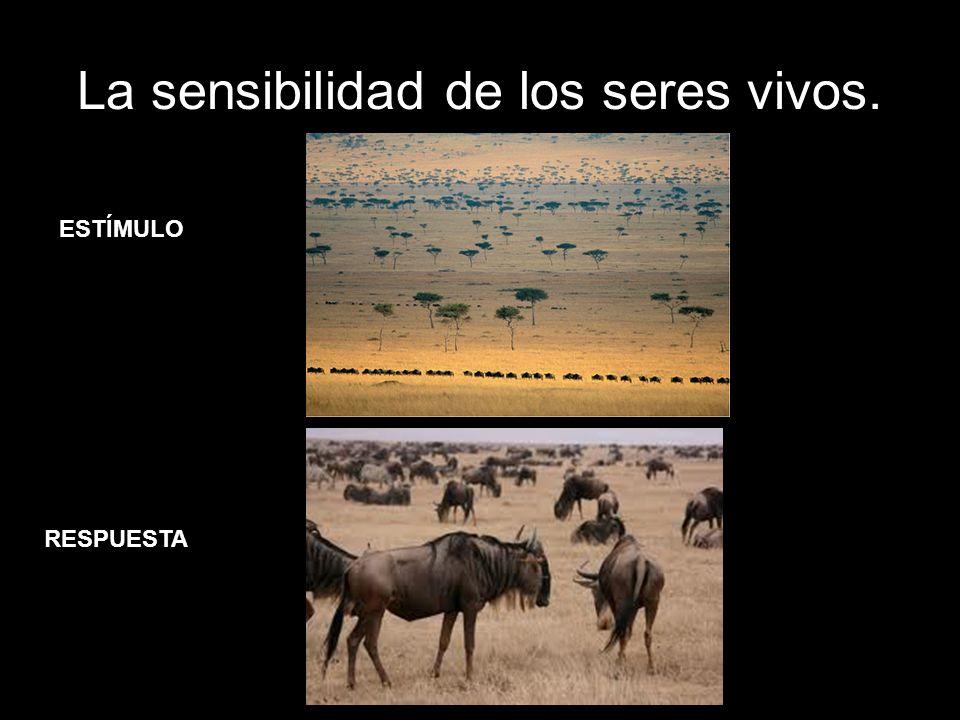La sensibilidad de los seres vivos.