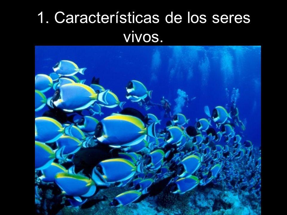 1. Características de los seres vivos.