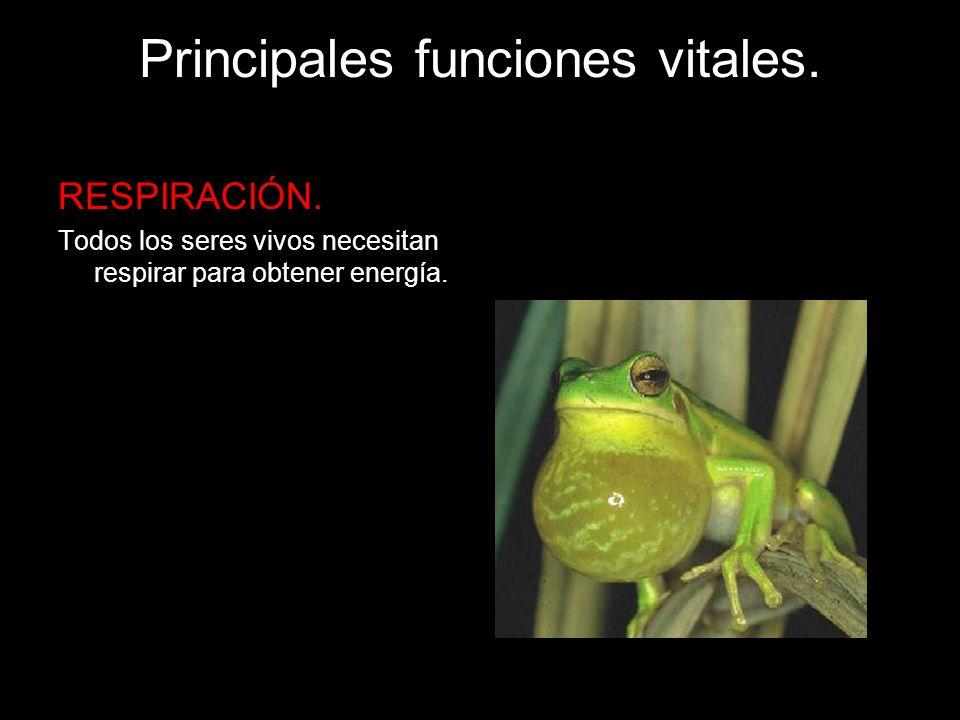 Principales funciones vitales.