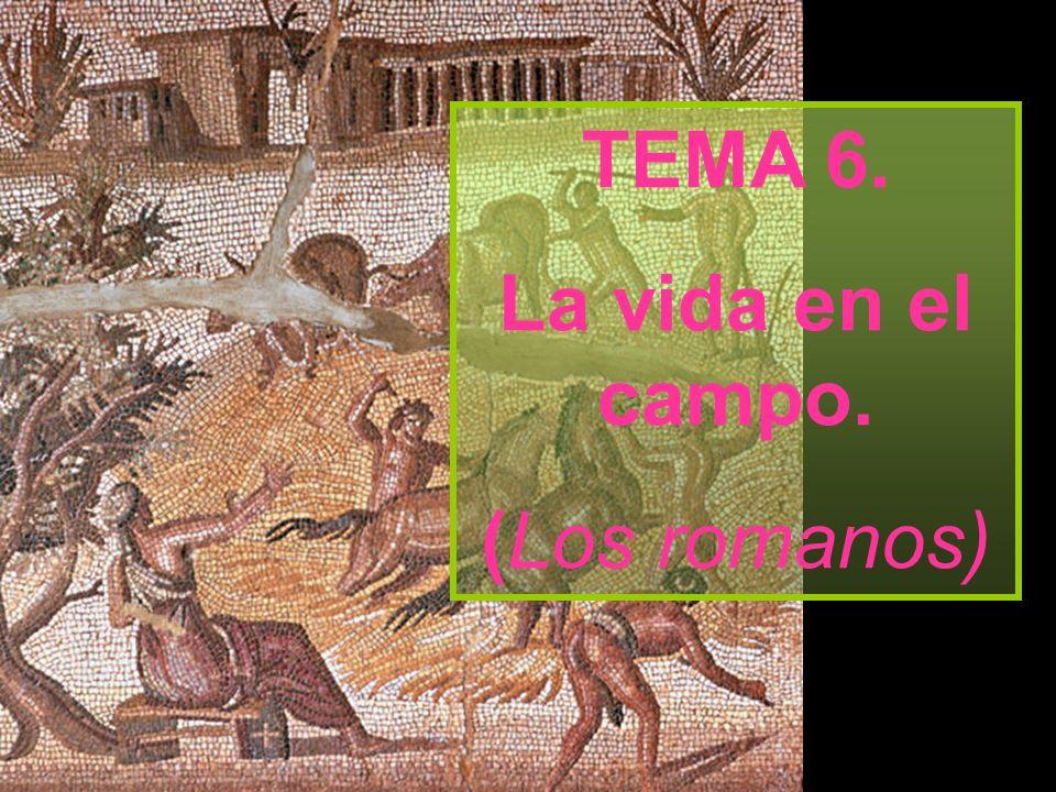 TEMA 6. La vida en el campo. (Los romanos)