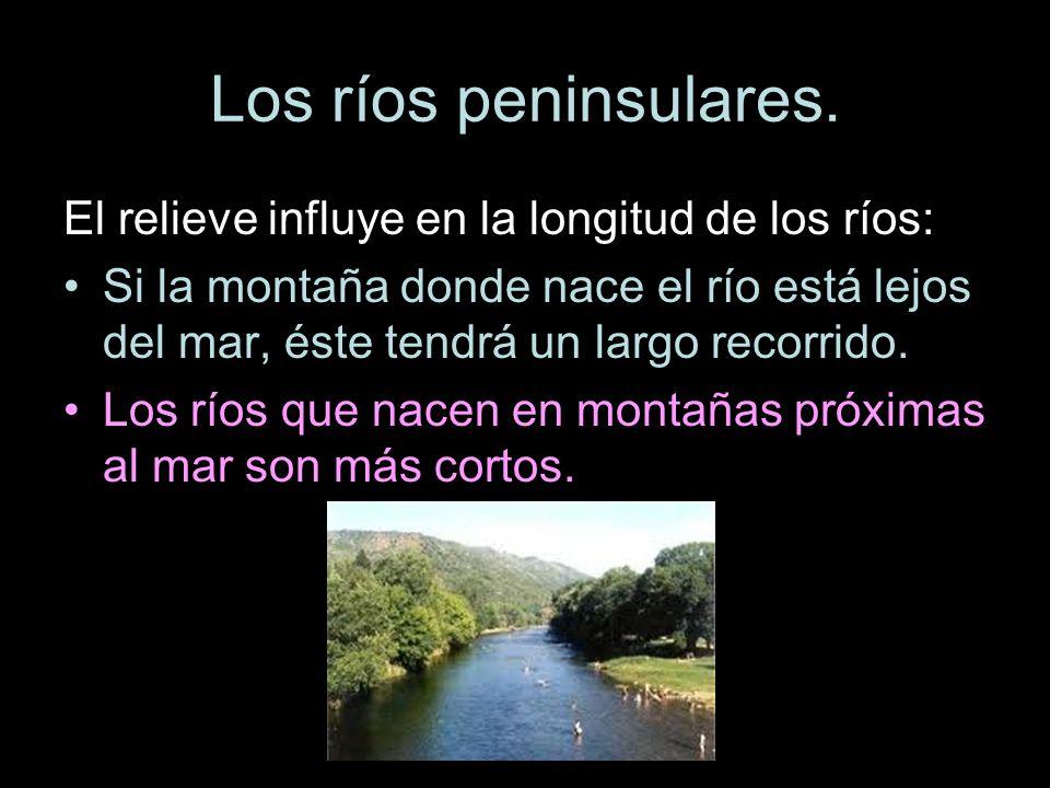 Los ríos peninsulares. El relieve influye en la longitud de los ríos: