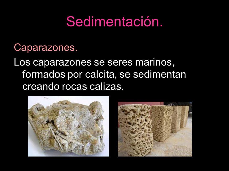 Sedimentación. Caparazones.