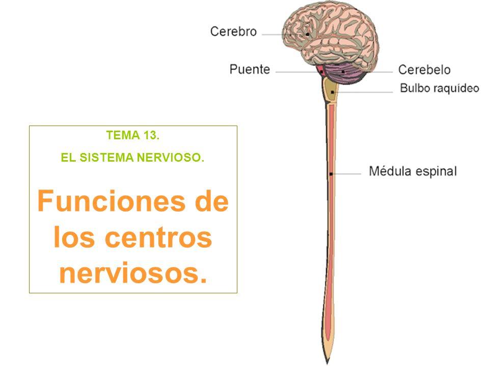 Funciones de los centros nerviosos.